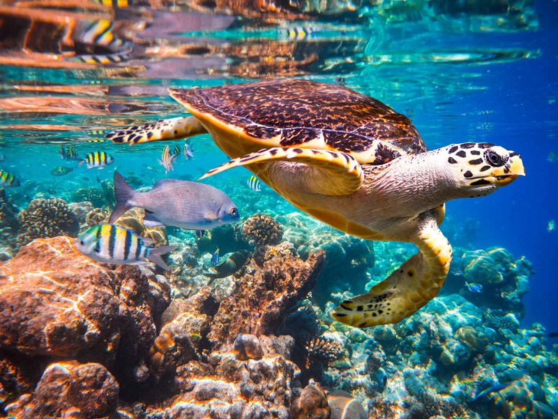 Ecosystem and Biodiversity